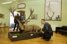 Der Vorsitzende des Naturparkvereins am Rothirsch-Präparat