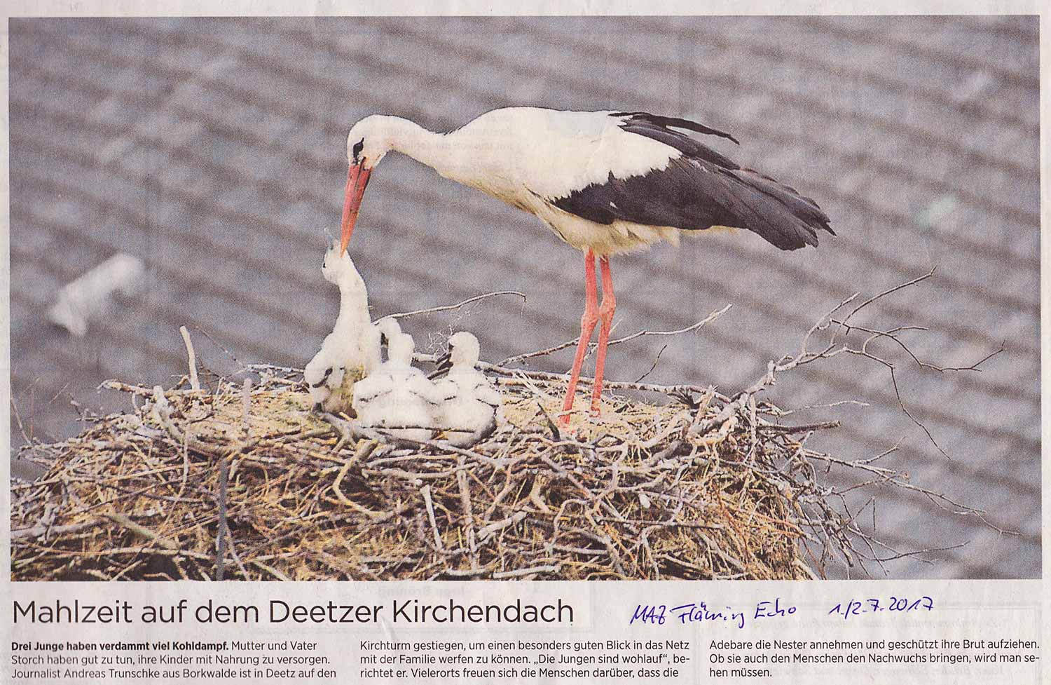 Foto in der MAZ